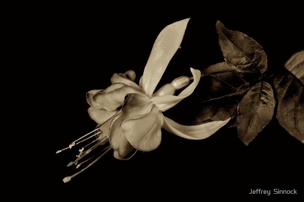 Fuchsia in sepia tone by Jeffrey  Sinnock