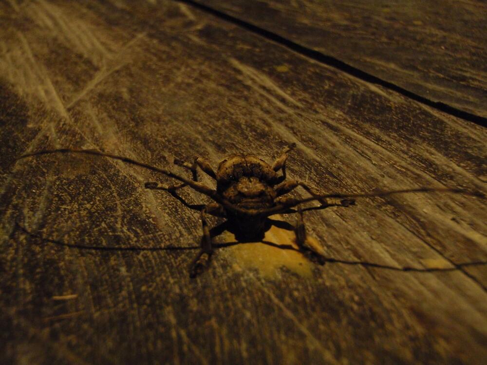beetle by Levi Moodie