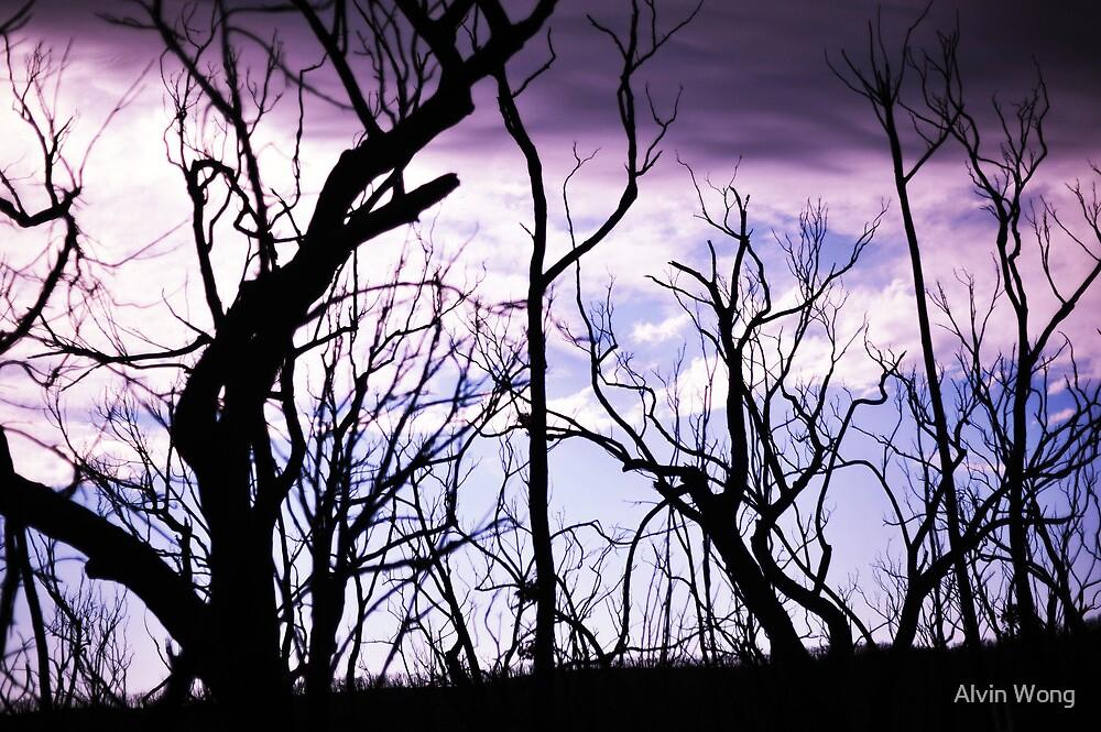 Purple Haze by Alvin Wong