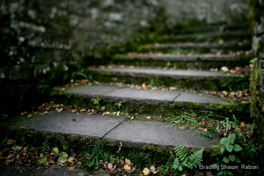 """""""Gentle Steps"""" by Bradley Shawn  Rabon"""