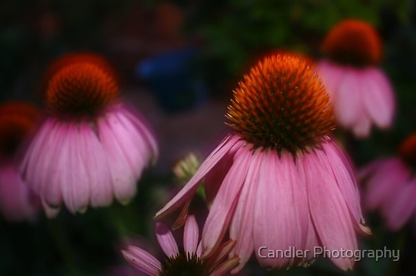 Blurred Mum by Candler Photography