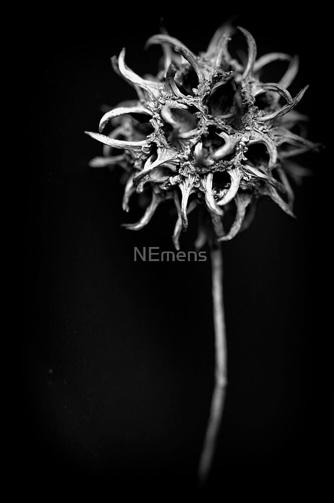 sweet/spikes by NEmens