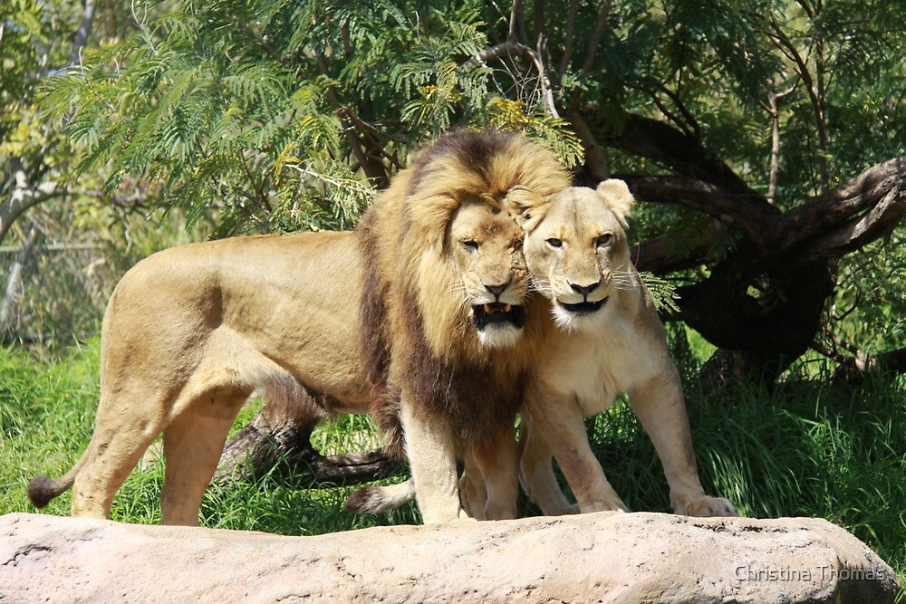 Lion and his Lioness by Christina Thomas