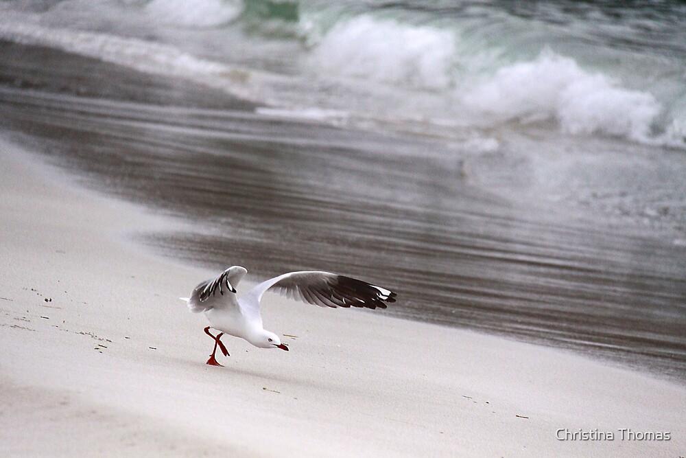 Seagull ready to take flight. by Christina Thomas