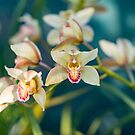 Orchids by Mark Prior