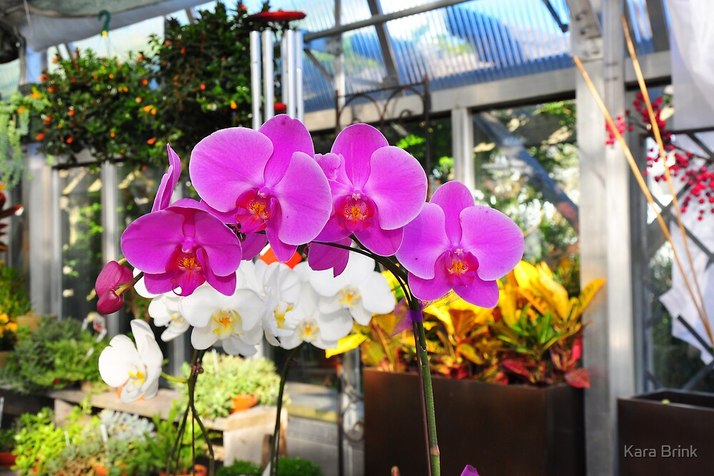 orchids by Kara Brink