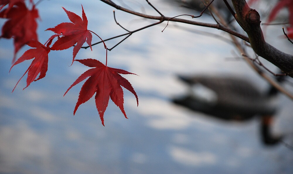 Bright Cold Leaves by Nathanael Dewhurst