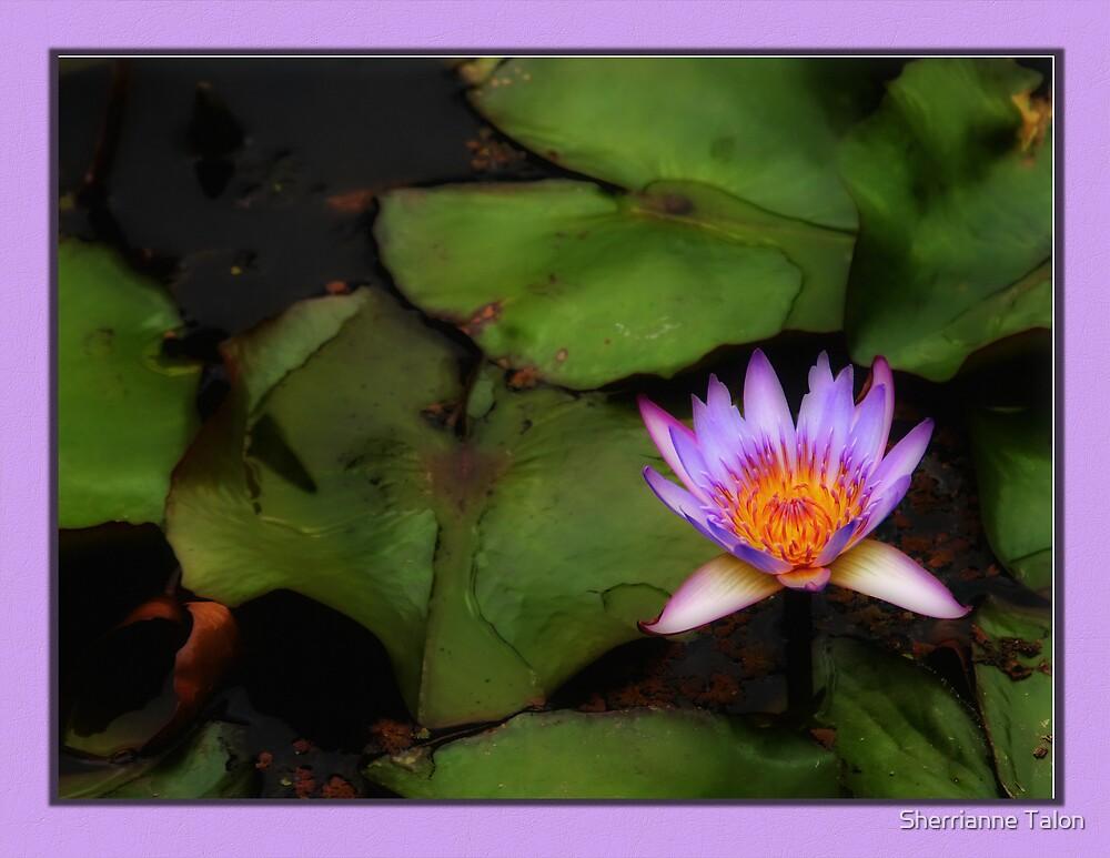 Beauty in Purple by Sherrianne Talon