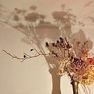 Still Life With Shadows by Alexandra Lavizzari