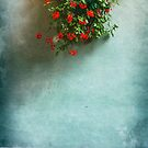 Geraniums on a wall by Silvia Ganora