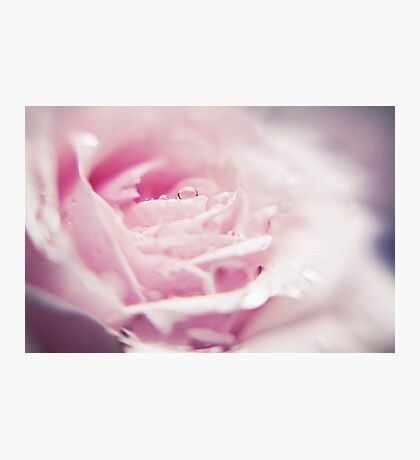 ~ as fleeting as the morning dew ~ Photographic Print