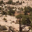 The Trees Of Canyonlands - 1 © by © Hany G. Jadaa © Prince John Photography