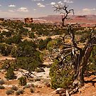 The Trees Of Canyonlands - 2 © by © Hany G. Jadaa © Prince John Photography