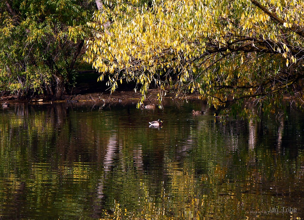 Beus Pond in the Fall by Jan  Tribe