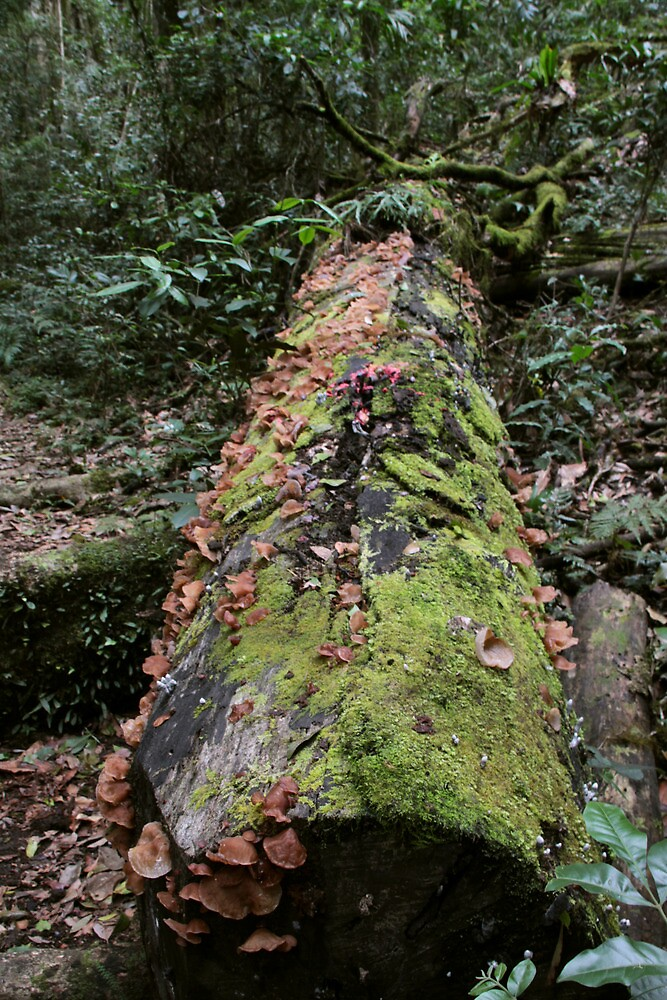 Moss and Fungus on Tree by smallan