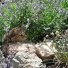 Lilah in the garden by Twistedwhisker1