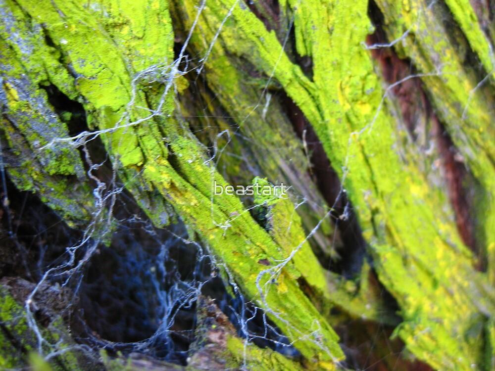 Lichen on a tree,.Centenial Park by beastart