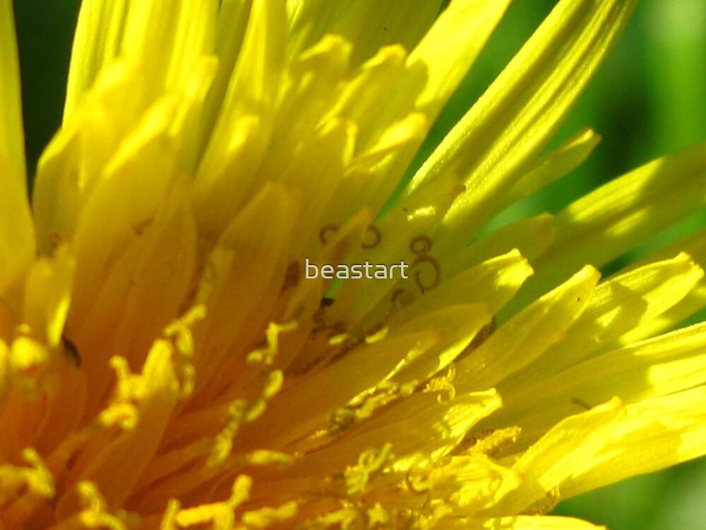 a dandelion by beastart