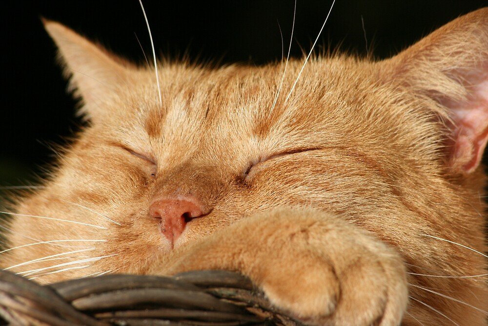 taking a nap in the autumn sun by marinamagri