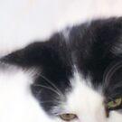 cats eyes by Profo Folia