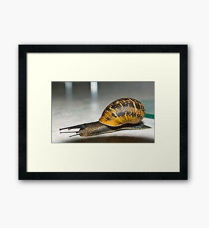 House Travelling Framed Print