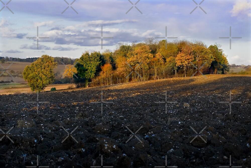 Autumn Copse by Geoff Carpenter