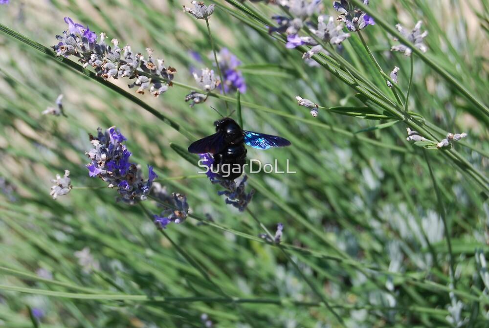 Lavender friends by SugarDoLL