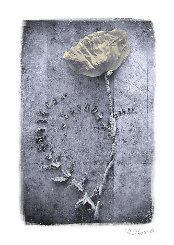 Life; Broken, Fragmented... by rharris-images