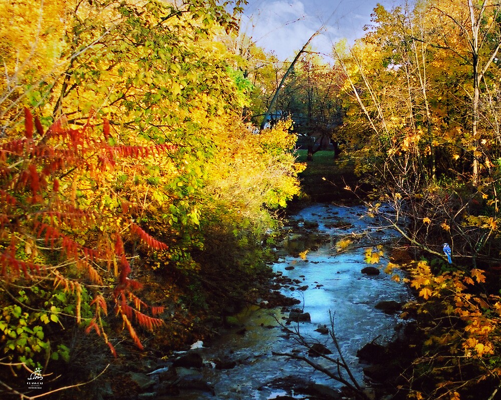 Fourty Mile Creek by David Buckle