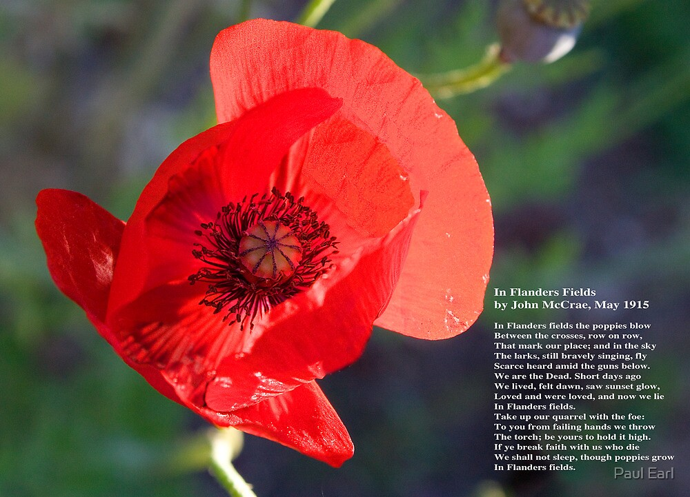 Flanders Fields by Paul Earl
