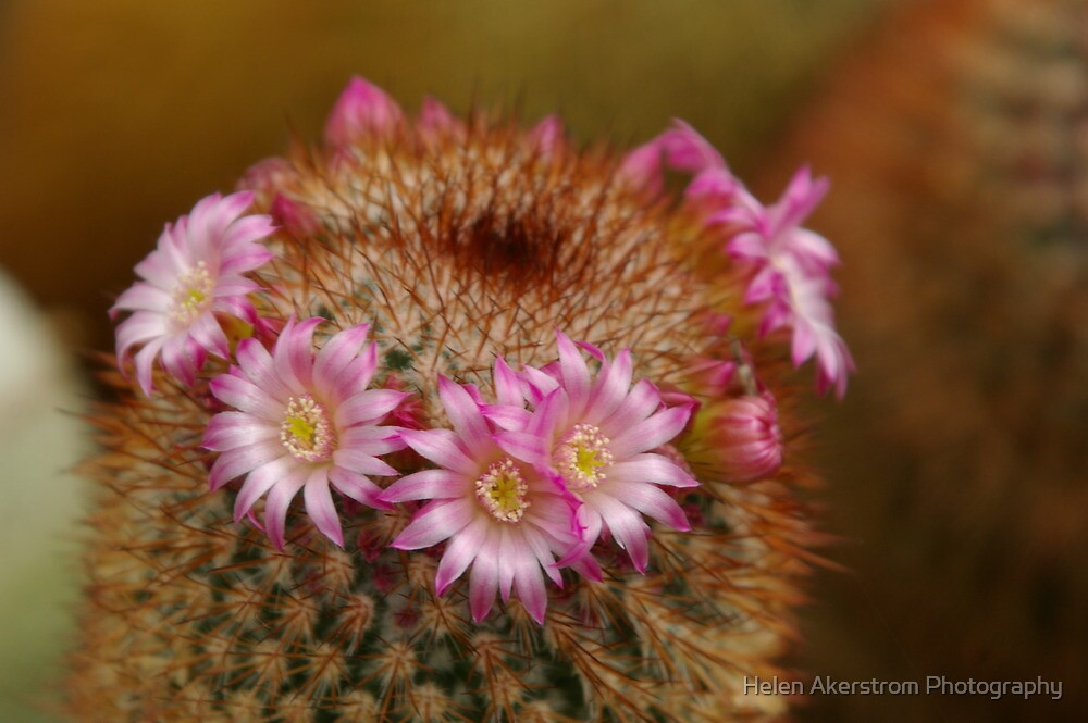 CACTUS # 2 by Helen Akerstrom Photography