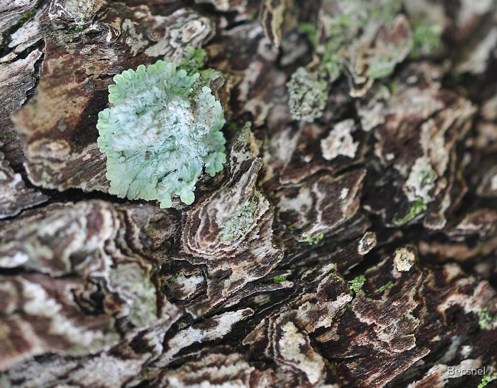 Bark & moss by Becsnel