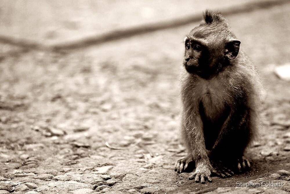 Monkey  by Stephen Colquitt