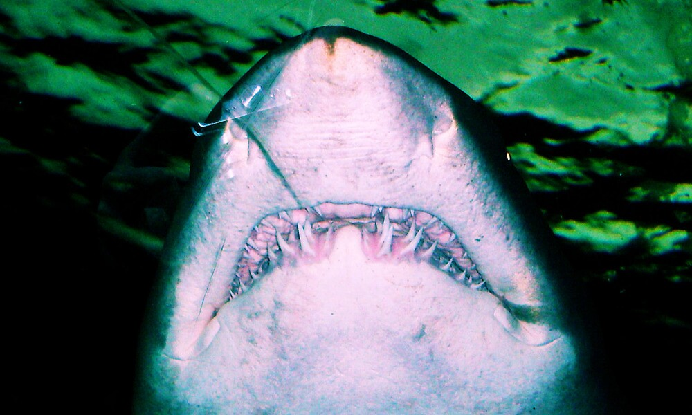 Shark's Smile by Dawsey