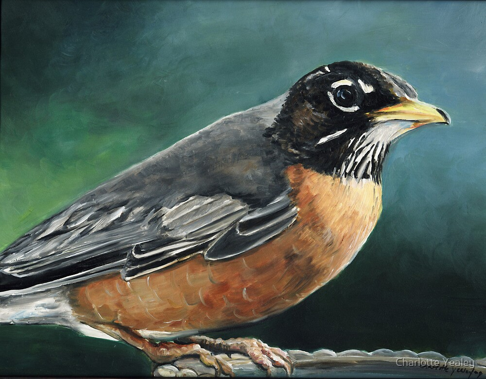 Robin by Charlotte Yealey