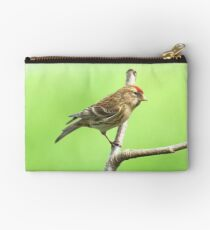 Common Red Poll - Carduelis Flammea Studio Pouch