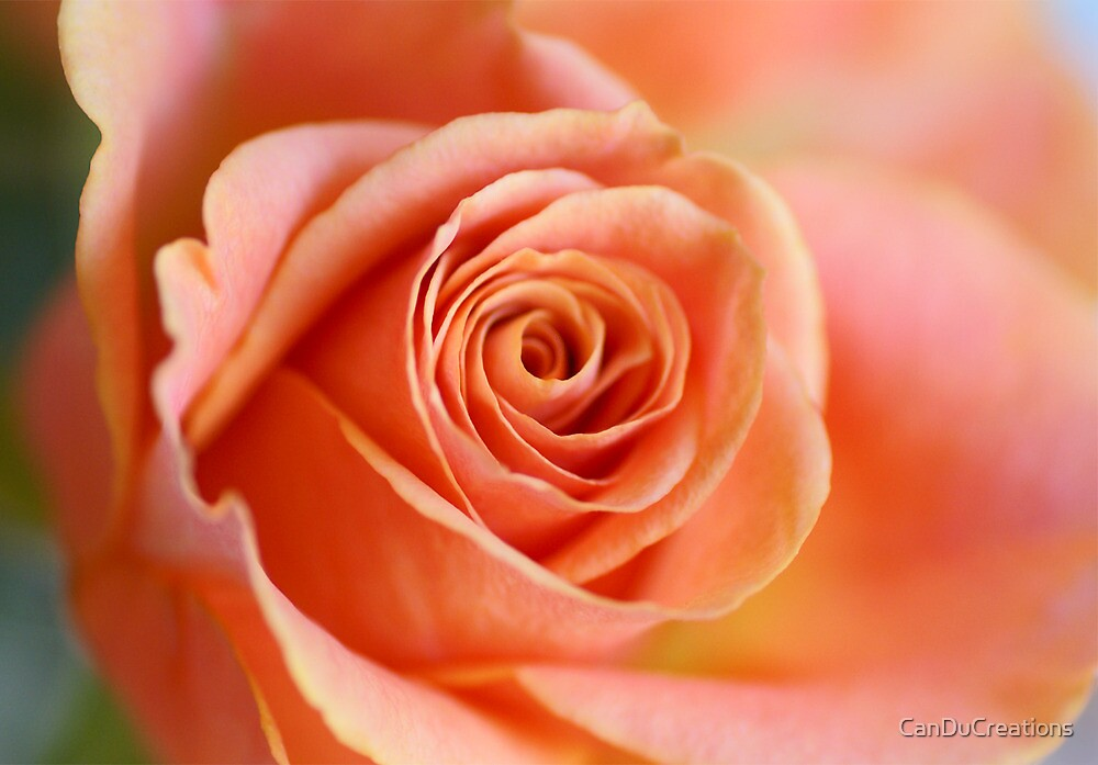 Beauty in peach by CanDuCreations