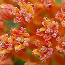 Summertime  Dew by WandaKrack
