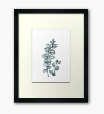 Eucalyptus Twig Framed Print