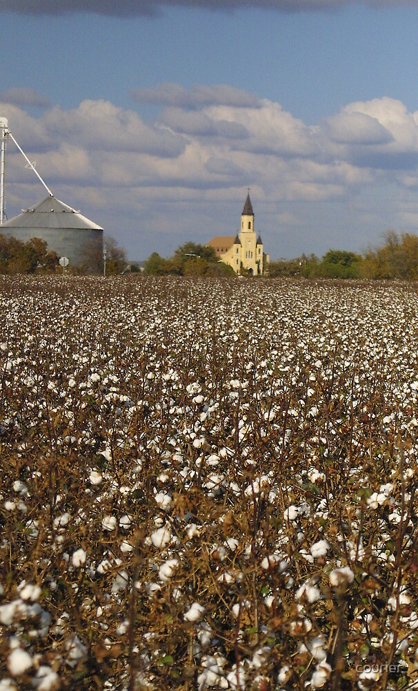 Cathedral in the Cotton Patch by courier