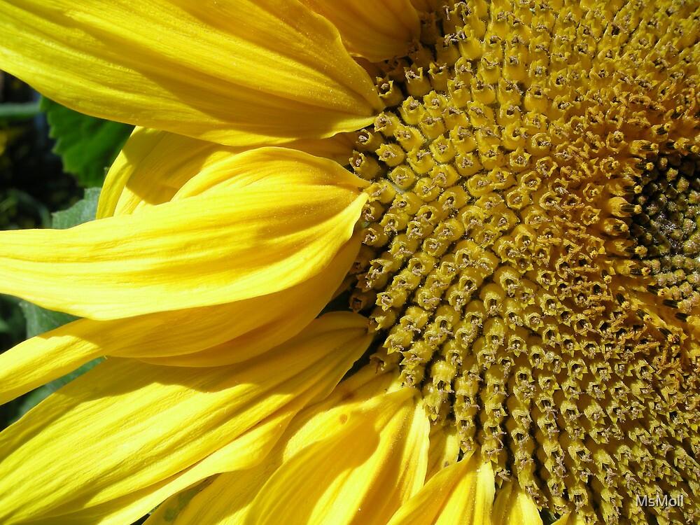 Sunny Sunflower by MsMoll
