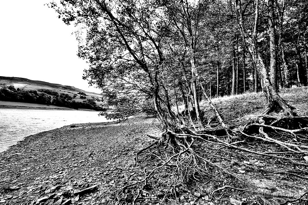 """""""Rooted in Black and White"""" by Bradley Shawn  Rabon"""