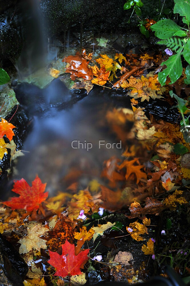 Fall Spring by Chip  Ford