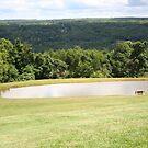 Uncle Dave's Pond (Brunner's Pond) by DVnJD