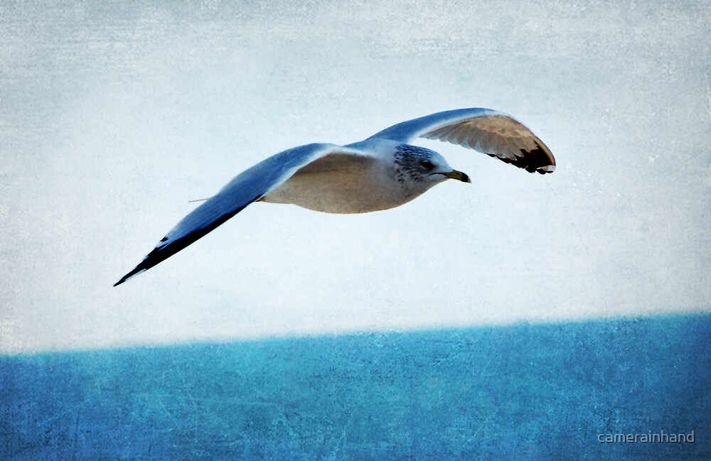 Seagull by the Sea by camerainhand