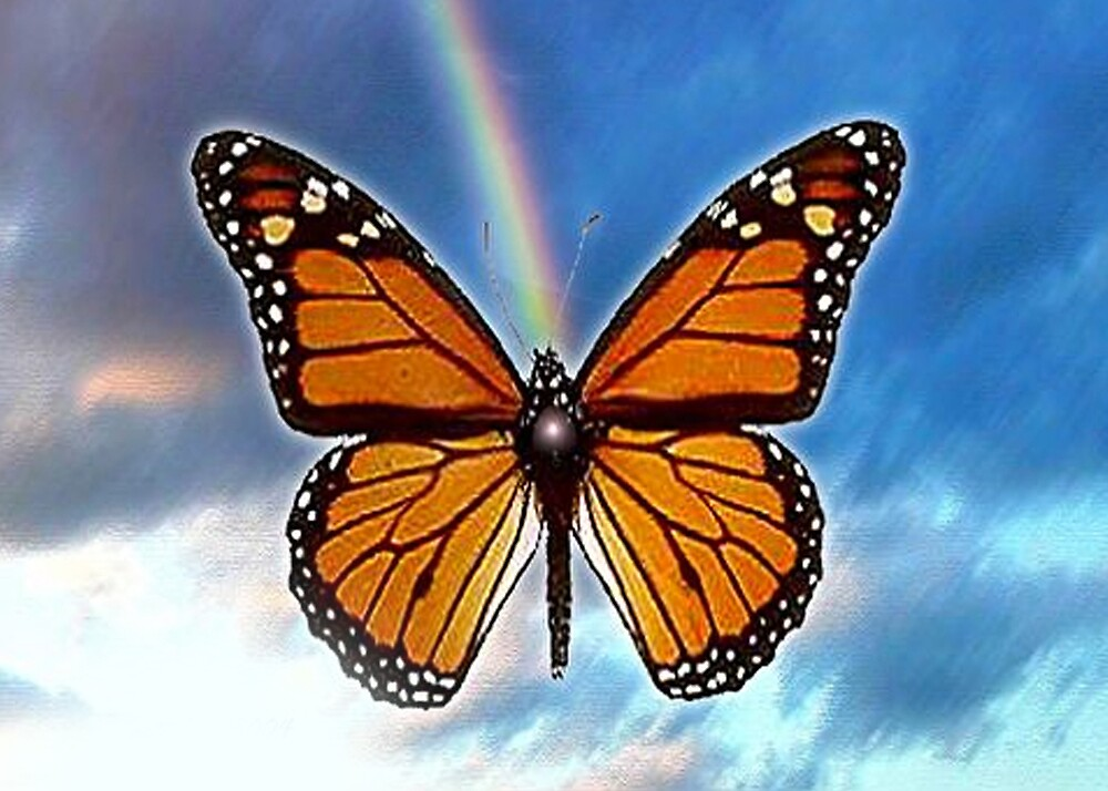 rainbow butterfly by cardtricks