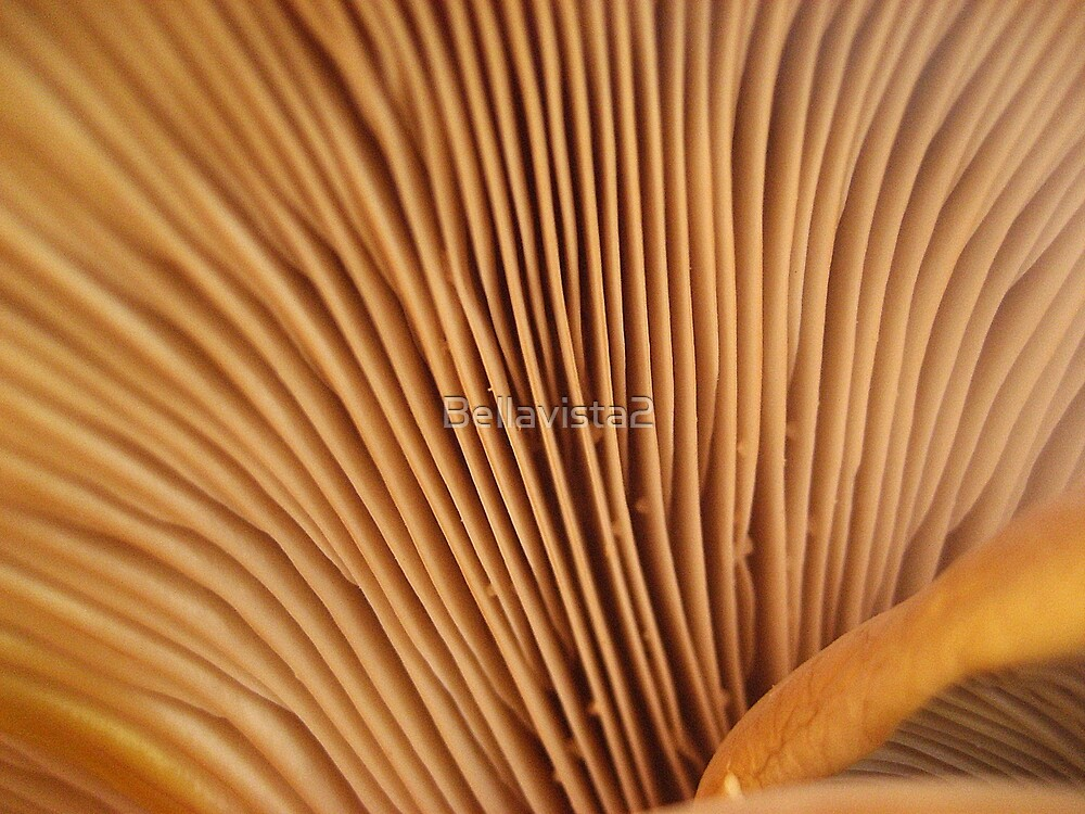 The Underside of a Oyster Fungus by Bellavista2