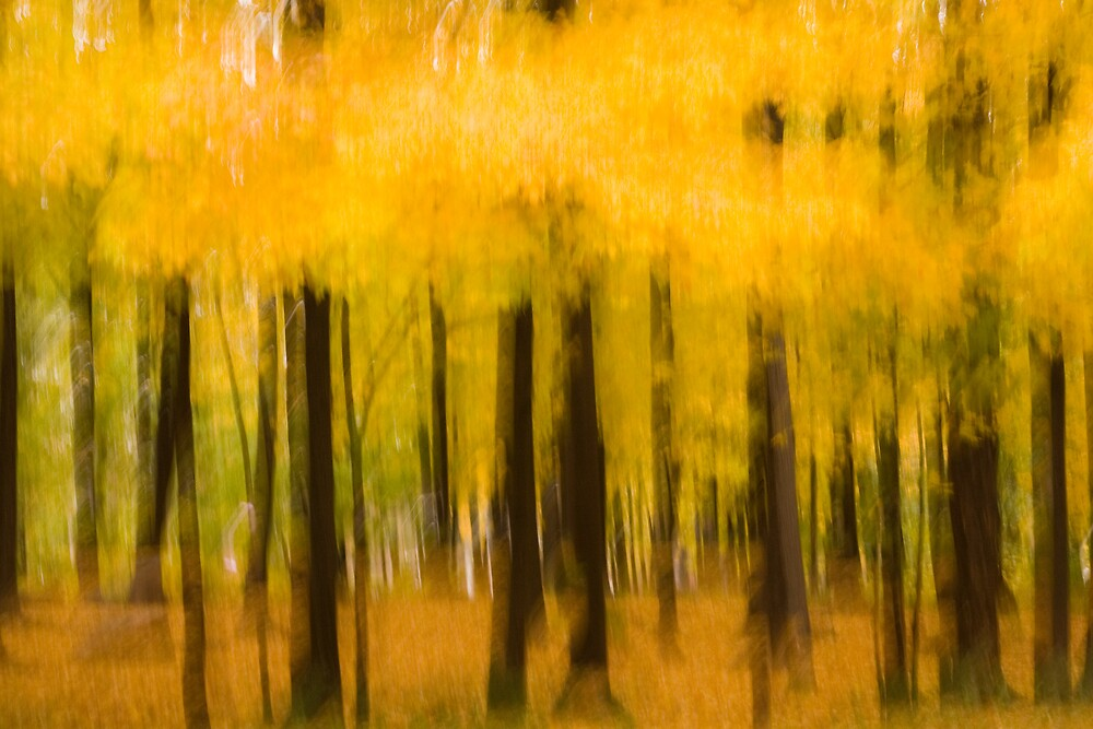 Golden Trees by Sarah G.