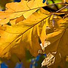 AUTUMN LEAVES by MIKESCOTT