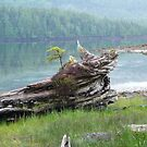 log at Butze rapids by Istvan Hernadi